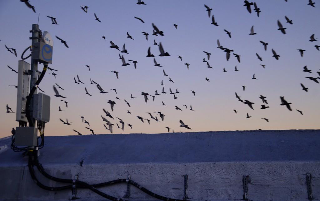 Vom Vogelschwarm geweckt.