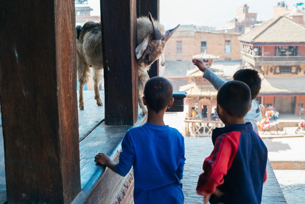 Eine Ziege, die über den Tempel wacht und ein paar gelangweilte Jungs, die sie permanent ärgern...